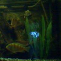 HSB Live Cam Aquarium