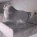 Taeubers Tauben-Webcam