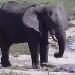 AfriCam Elephant