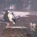 Storchennest auf dem Rathaus in Isny