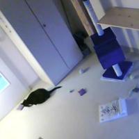 Samtpfote - Katzenzimmer 1