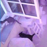 Samtpfote - Katzenzimmer 4