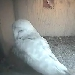 The Barn Owl Trust - Nestcam