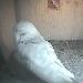 The Barn Owl Trust - Nestcam