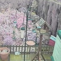 Ade´s Hedgehog & Garden Wildlife Cam