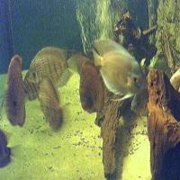 2000 Liter Aquarium - Ohenning