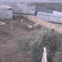 Condor Cam - San Diego Zoo