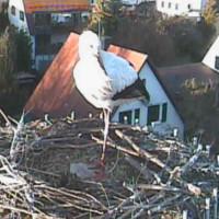 Storch in Bayern
