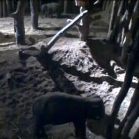 Elefanten im Dierenpark Amersfoort