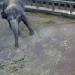 Elefantencam im Zoo Jekaterinburg