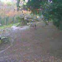 Wölfe im Zoo Dublin