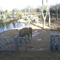 Elefantencam im Twycross Zoo
