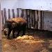 Elefantencam im Tallinn Zoo