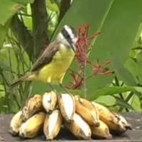 Ornithos Birdwatching