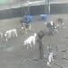 Dog Resort Cam
