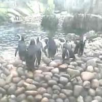 Pinguine und Seelöwen im Bristol Zoo