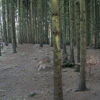 Wölfe im NUP Güstrow