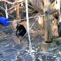 Schimpansen im Zoo Kolmarden