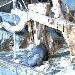 Gorillas im Zoo Kolmarden