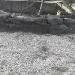 Erdmännchen, Löwe und Co. im Paignton Zoo
