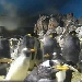 Pinguine im SeaWorld San Diego