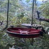 Buenaventura Cloud Forest Webcam