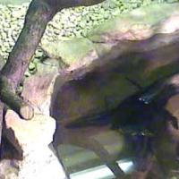 Croc Cam im Cotswold Wildlife Parks & Garden