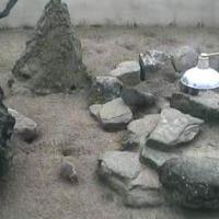 Erdmännchen im Coatswold Wildlife Parks & Garden