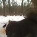 Eichhörnchen auf dem Deertrail