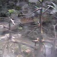 Gibbons im Minnesota Zoo