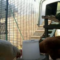 Eggorypeck