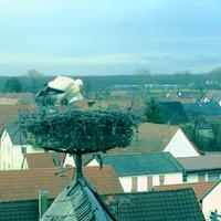 Storchencam Bornheim Ev. Kirche