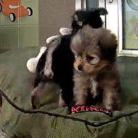 Puppy Cam - Animal Planet
