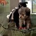 Puppy Cam - Animal Planet
