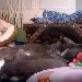 Kitten Cam - Animal Planet