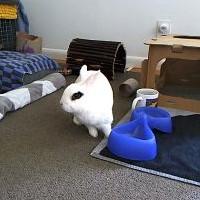 BKLYN Bunny