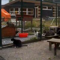 Katzencam aus Drachtstercompagnie