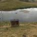 Schneeaffen im Highland Wildlife Park