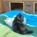 Kitten Cam Stars