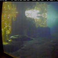 Robben im Toledo Zoo