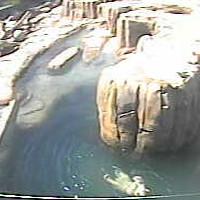 Eisbären im Toledo Zoo