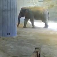 Elefanten im Smithsonian Zoo