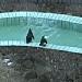 Pinguine im Tierpark Jaderberg