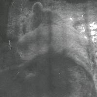 Bärenbox in Finnland