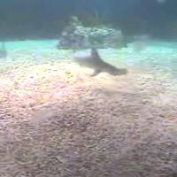 Haie im Monterey Bay Aquarium