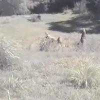 CheetahCam
