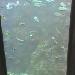 Fische im Monterey Bay Aquarium