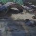 Voliere im Monterey Bay Aquarium