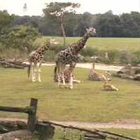 Afrika hautnah (Zoo Leipzig)